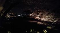 太平山の桜と夜景